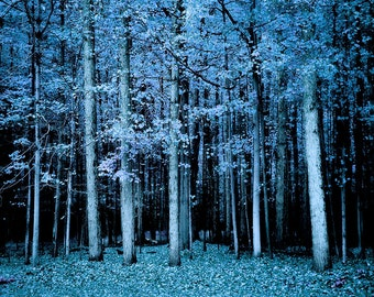 Tree Picture, Forest Print, Tree Print, Woods Print, Dreamy Trees, Blue Trees, Woodland Picture, Tree Photography, Dreamy Ethereal, Haunting