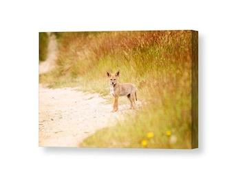 Coyote Art, Nature Canvas, Baby Animals, Wildlife Canvas, Nature Photography, Wildlife Photography, Nature Wall Art, Animal Decor,Animal Art