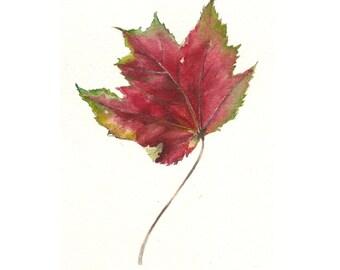 Watercolor Autumn Maple Leaf