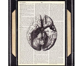 ANATOMICAL BRAIN art print human anatomy medical science doctor neurology psychology on dictionary book page illustration wall decor 8x10