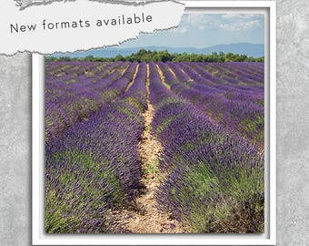 poster photography Lavender france poster printable instant download 5 X 5 8 X 8 10 X 10 12 X 12 15 X 15 16 X 16 18 X 18 20 X 20 30 X 30 50 X 50