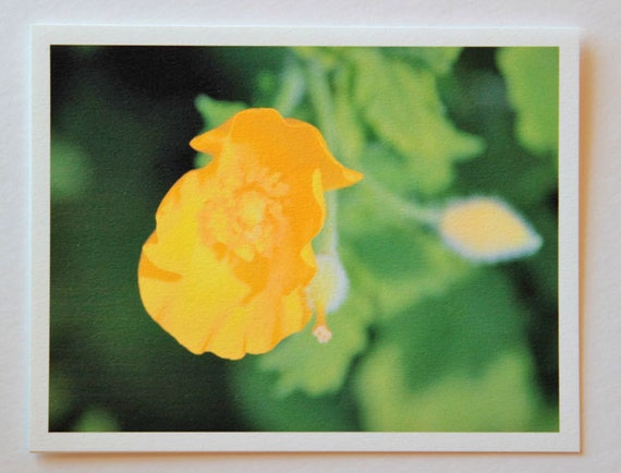 Wood Poppy, yellow, flowers, note card, blank fine art greeting card, flower photo, green, single card, photo greeting card, garden, nature
