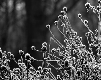 Nature Photography, Winter, Black and White Nature Photography