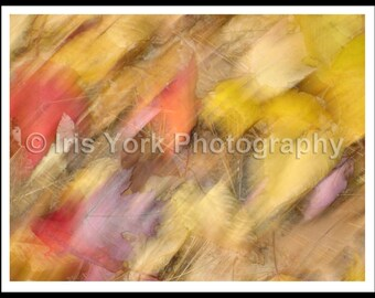 Blurred Leaves in Fall, Colorful Abstract, Leaves on Ground, Fall Colors, Landscape Print, Nature, Woodstock, Autumn
