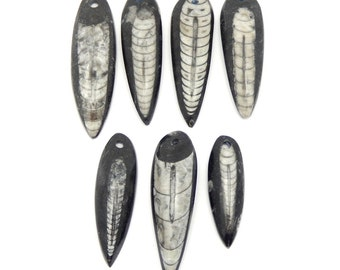 Orthoceras Teardrop Fossil Drop Bead - Top Drilled Bead (RK2B17-09)