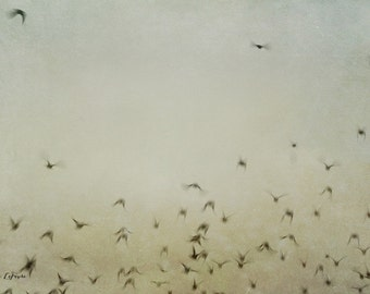 follow, birds, flying, fine art photography