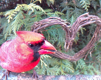 Valentine's Day Card featuring a Male Cardinal with a Heart for Valentine's Day
