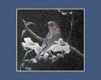 Blue Bird Matted Print By Stan White