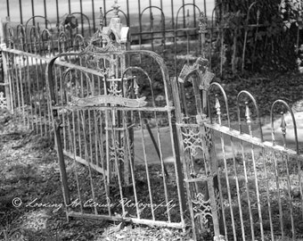 wrought iron garden gate and fence art photo, black and white photography, vintage garden decor, shabby cottage chic