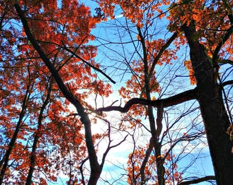 Autumn Tree Photography, Red Fall Leaves, Orange Leaves, Fall Tree Photo, Fall Home Decor, Fall Print, Autumn Decor, Blue Sky, Connecting