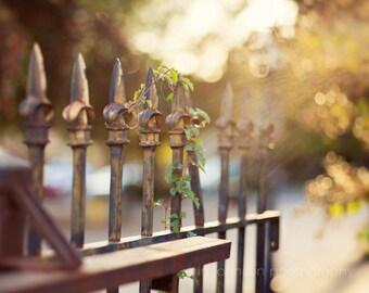 fine art photograph fence architectural photography abstract bokeh neutral decor wrought iron fleur de lis finials