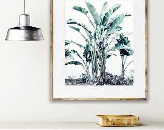 Botanical Photography, Tropical Print, Minimal White Modern Art, Pale Green Photograph, Tropical Green Leaves, Large Wall Art Photography