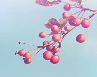 Cherries Color Photo Print { red, blue, branches, fall, tree, sunlight, berries, sunshine, wall art, macro, nature & fine art photography }