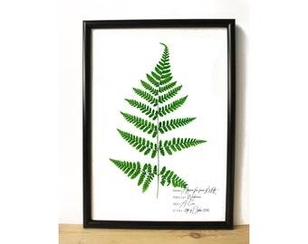 Fern botanical poster - Botanical print - Botanical illustration - Pressed plant art