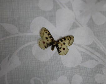 transparent Butterfly beige, Brown and orange 1.8 x 1.3 cm, n131