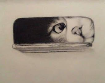 Cat Peeking From Box