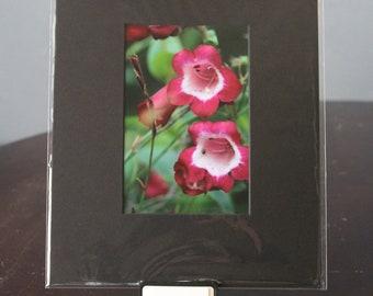 4 x 6 Red Fox Glove Flower Photo Matted to 8 x 10