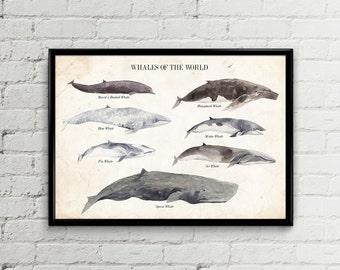 Baleines affiche affiche whale baleine baleines impression imprimer