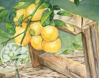 Lemons, Giclee print of an original water-colour illustration.