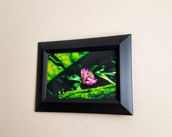 Pink Flower Framed Print - Nature Photography by Elise Neves