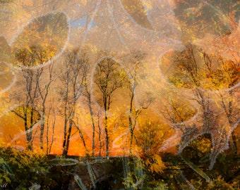Fall colors, fine art photographic wall decor, pigment print