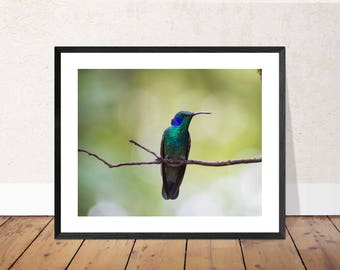 Hummingbird Photographic Print / Photograph / Photography Image / Wall Art (various sizes and customisation available)