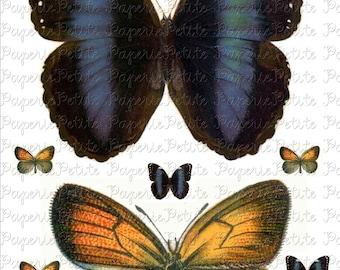 Super-Sized Butterflies Digital Download Collage Sheet