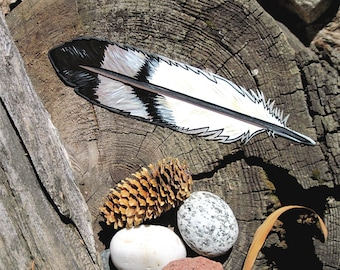 Golden Eagle Feather magnet