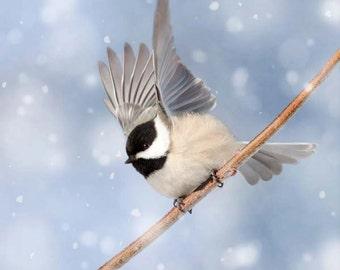 Winter Bird Print, Bird Photography, Winter Art, Woodland Animal Photography, Forest Animal Art Print, Chickadee in Snow No. 5