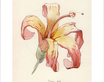 Tropical flower drawing, Botanical Poster PRINT, floral watercolor drawing. Vanilla and pink flower, botanical art by Catalina.