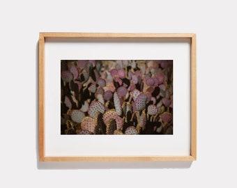 Purple Cactus Photograph