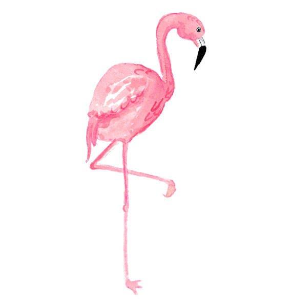 Watercolor Flamingo Clipart Tropical Bird Illustration
