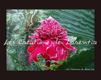 30X40cm picture close-up on a pink porcelain of Costa Rica