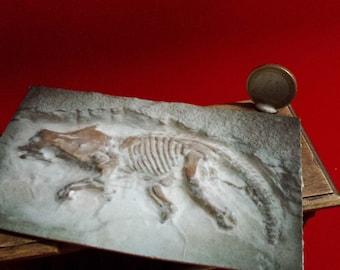 Miniature dollhouse find fossil