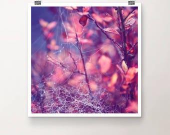 StringTheory - FineArt Print Nature spider net plant bush Macro Rain Drops