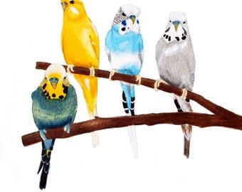 "Four Budgies Watercolour 10"" x 8"" Print"