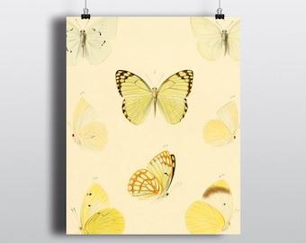 Printable art, Prints, modern vintage Art Prints Online,Wall Art, Art Prints, Wall Art Prints, Butterfly, Wall Decor, Home Decor.