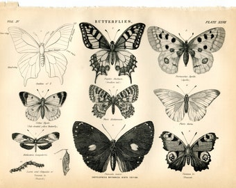 9 Original Prints - Butterflys, Bugs and Crab - 1870's