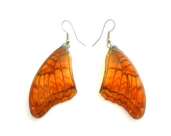Real Butterfly Wings Earrings Handmade Jewelry Gift / Honey Brown / Natural Jewelry Earring
