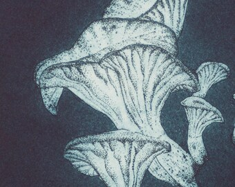 Glow - original hand pulled etching of forest fungi in dark blue ink.