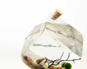 Geometric Aqua Terrarium - Synergy Bud Vase with cork stopper - Marimo Japanese Moss Ball - Home Decor - Desktop Accessory