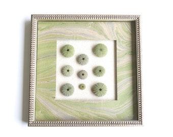 Framed natural urchin skulls, 1980s / Boho chic Bohemian folk nautical pale green cabinet of curiosities nature