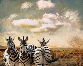 Photography The three zebras, animal photo, nature photo, zebras, African Bush, Safari, Fine Art Print, nursery decor for.