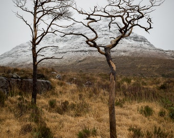 Trees of Torridon, Scotland