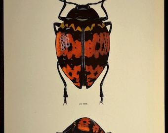 Insect Wall Art Beetle Print Decor Bug Art Nature Vintage