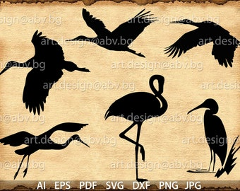 Vector BIRDS, AI, eps, pdf, svg, dxf, png, jpg files Download, collection, models library, discount coupons