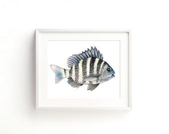 Sheepshead Watercolor Fine Art Print