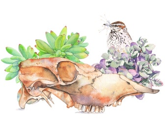 Skull, succulents and Cactus wren print of watercolour painting - 5 by 7 size smallest print - SSC0816