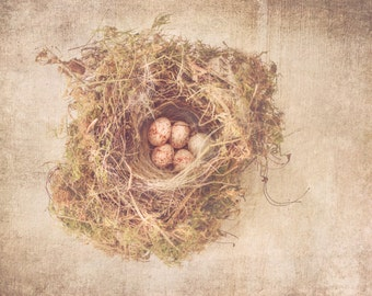 Nest Photography - Home Decor - Nature Photography - Cottage Chic