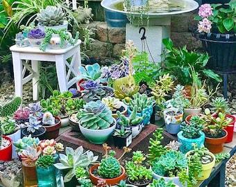 300 Mixed Succulent Seeds - 24 Kinds Succulents, Lithops, Living Stones Seeds, Rare Succulents, Potted Plant, Seeds, Garden Decor